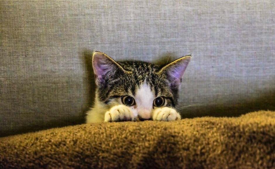 Angst voor vuurwerk bij katten verminderen