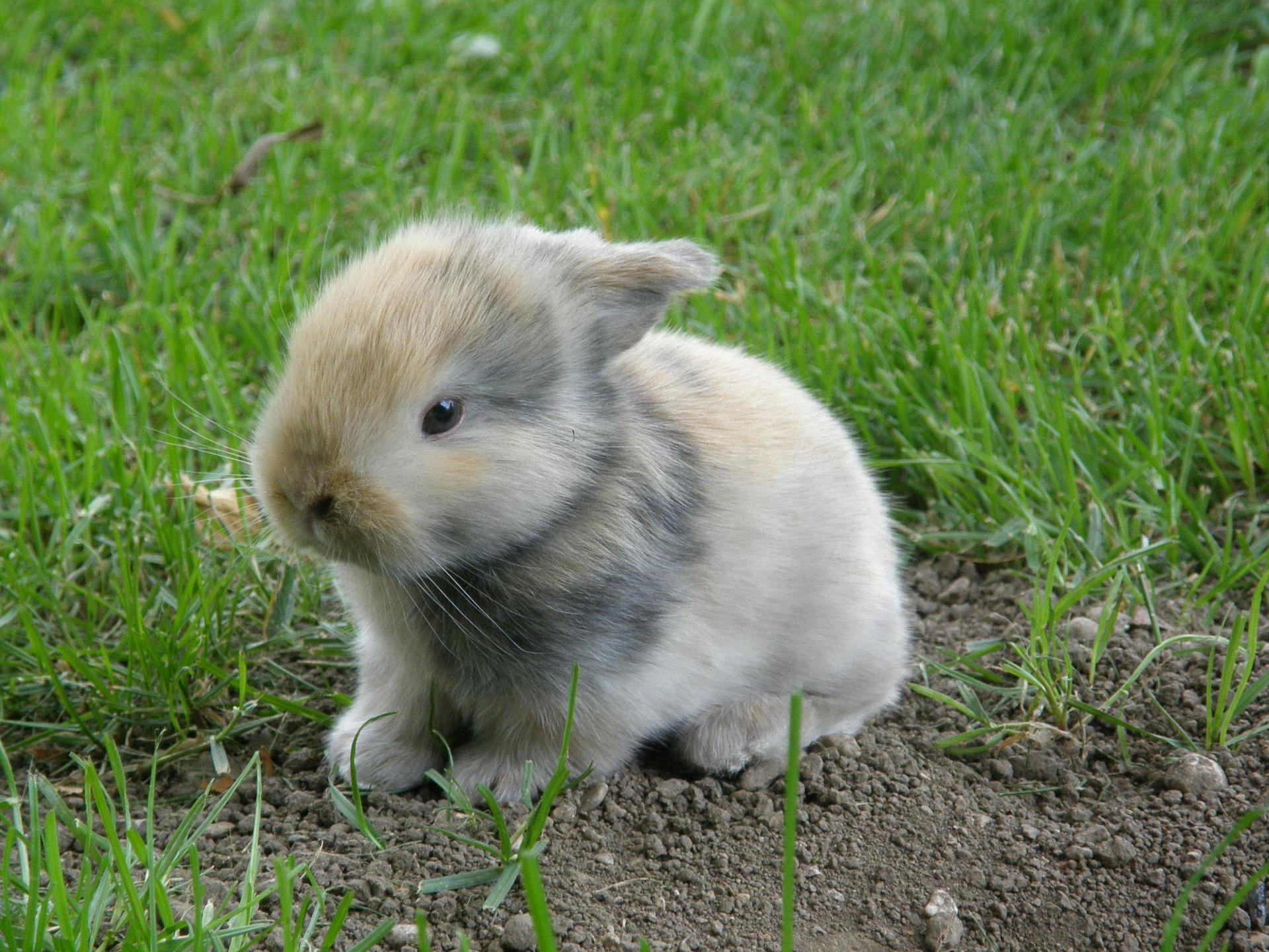 Hoe heet een baby konijn, vrouwtjes- en mannetjeskonijn