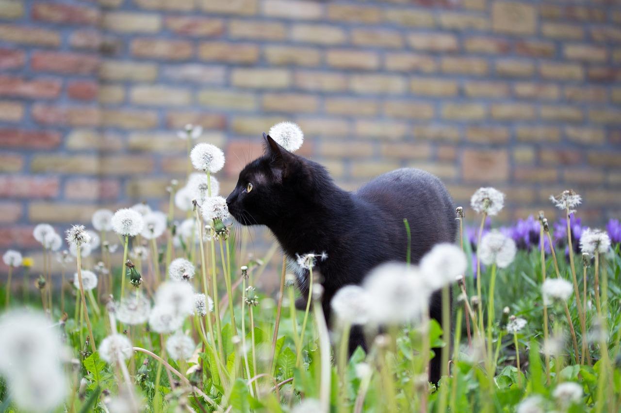 Katten Krabben Bank Afleren. Free Laat Je Kat Beter Binnen Nu Het ...