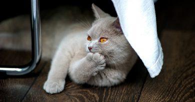Nagels knippen van je kat