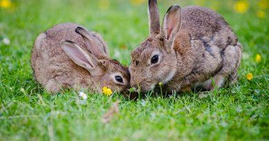 Hoe oud wordt een konijn?