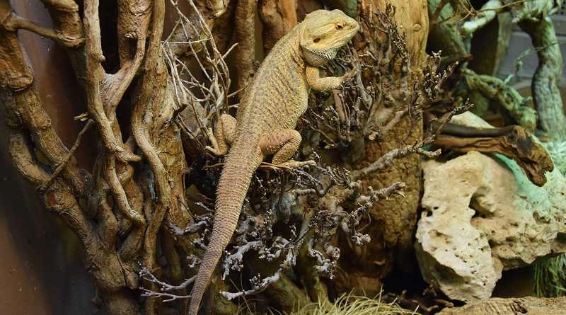 reptiel in terrarium