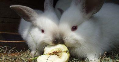Mogen konijnen appel?