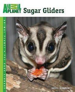 Sugar Gliders Animalplanet boekcover