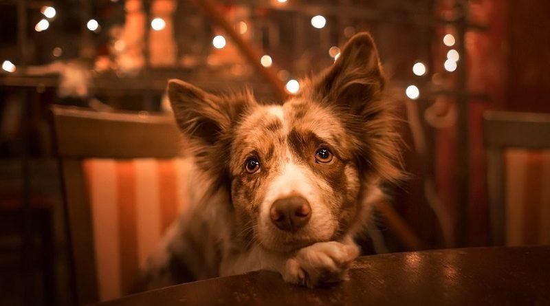 hond met verlatingsangst