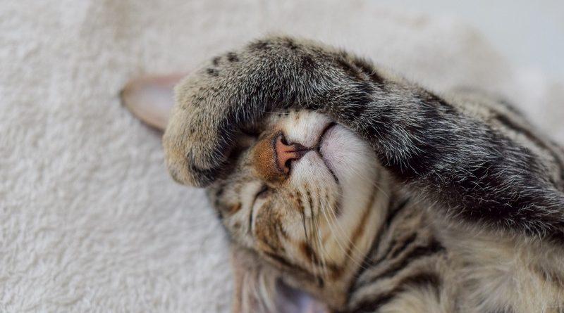 ontspannen kat