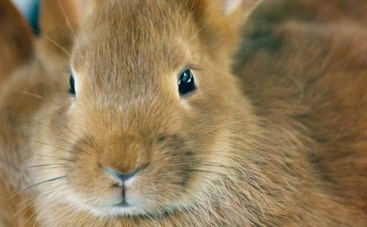 mond konijn
