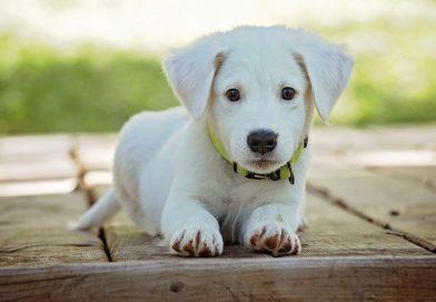 Benodigdheden voor opvoeding van je hond