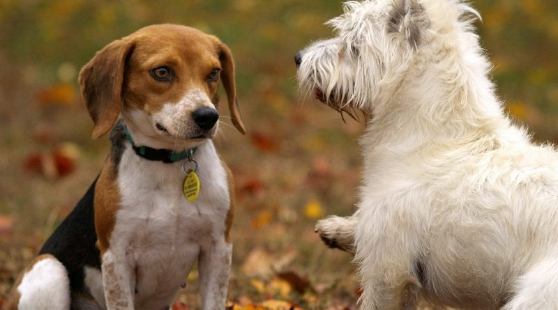 sociale honden