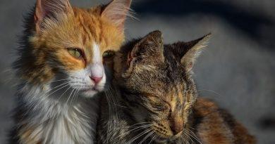 Kat chippen wordt mogelijk verplicht