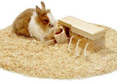 Konijnen speelgoed, welke speeltjes vindt je konijn het leukst?