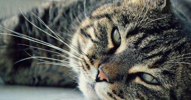 Hoe oud wordt een kat?