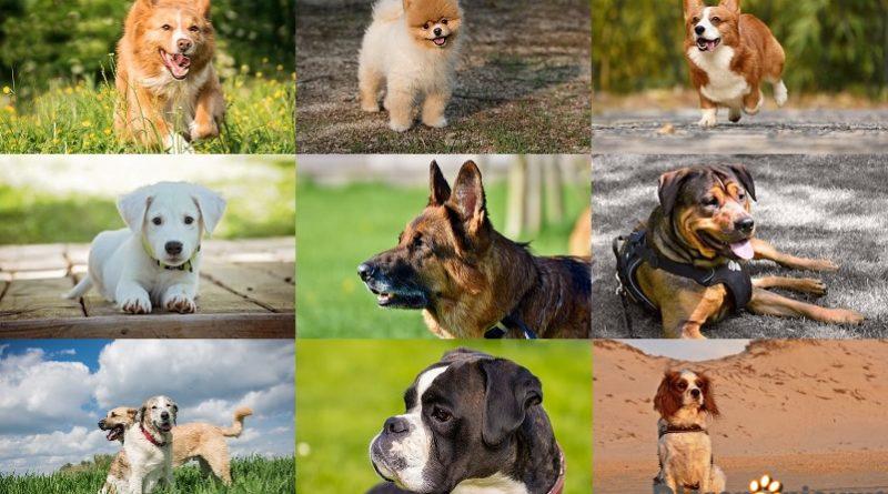 dag van de hond 2018