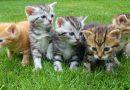 Kitten kopen, waarop letten?