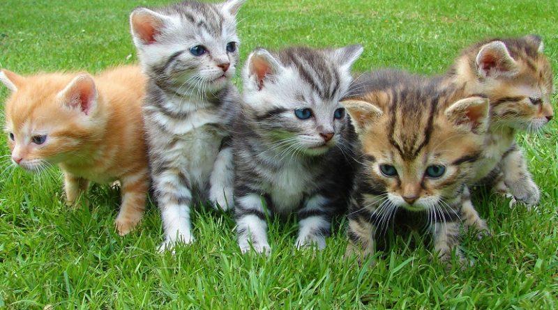 kittens op grasveld