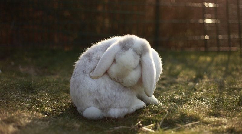 konijn wast zichzelf