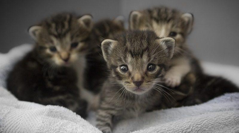 nestje kittens