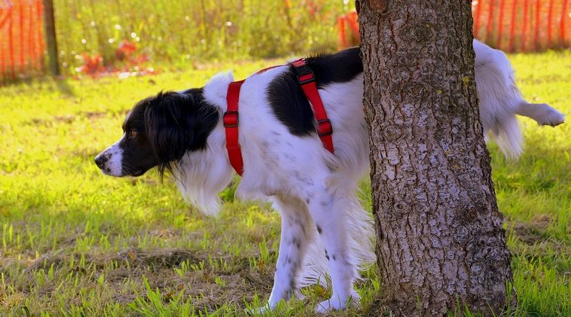plassende hond