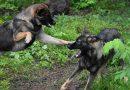 Gevecht tussen honden voorkomen
