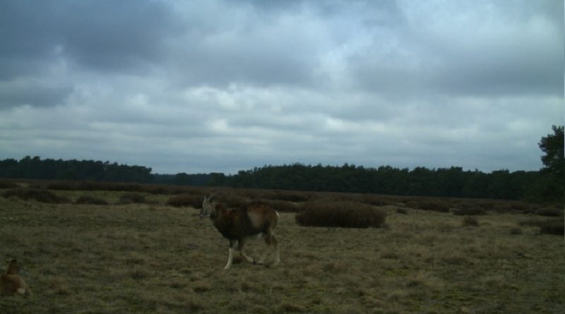 beeld webcam hoge veluwe - project snapshot