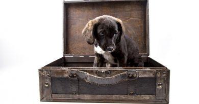 Hond mee op vakantie? Niet elk ras is overal welkom!