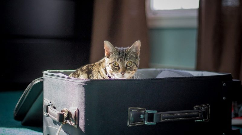 kat in koffer