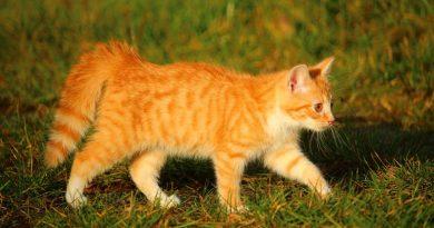 Lichaamstaal van katten begrijpen