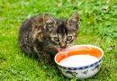 Melk, is dat goed voor katten?