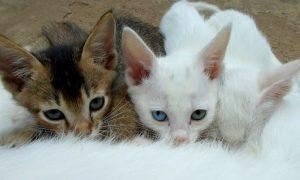 kittens drinken moedermelk