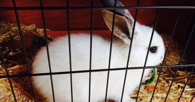 Gedragsproblemen bij konijnen