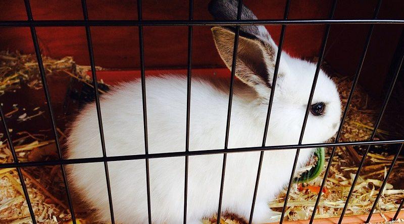 konijn in konijnenhok