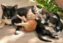 Wanneer mogen kittens het nest verlaten?