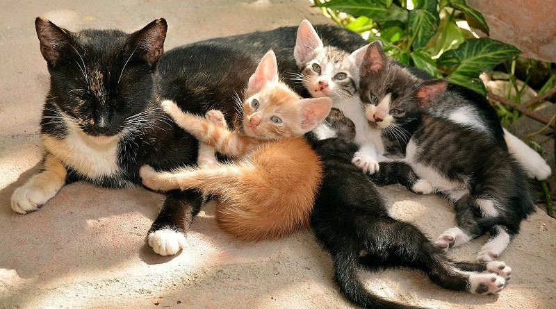 nestje kittens met moederkat