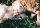 Max en Luna populairste katten- en hondennamen