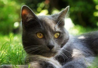 Kat koel houden bij warm weer
