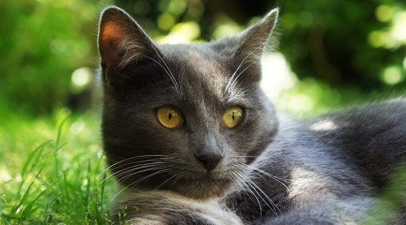 kat in zon op grasveld