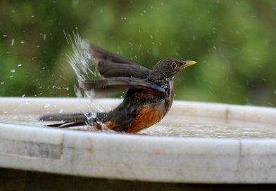 Help vogels de droogte en warmte door!