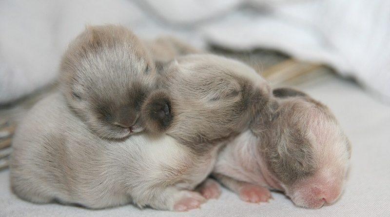 nestje baby konijntjes