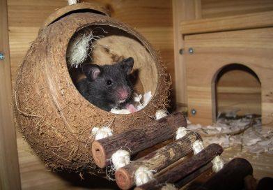Nestmateriaal voor hamsters