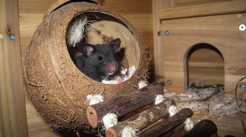 hamster in huisje