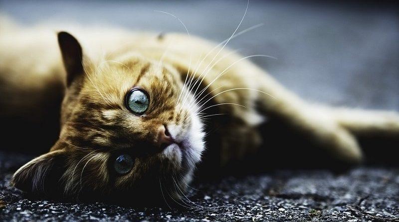 kat liggend op zij