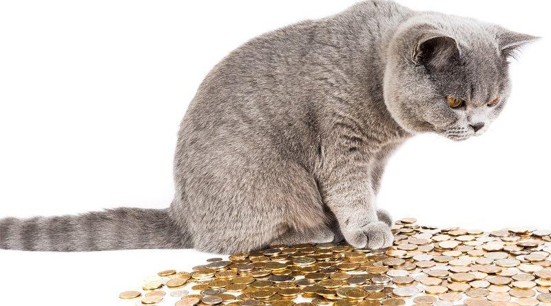kat met muntgeld