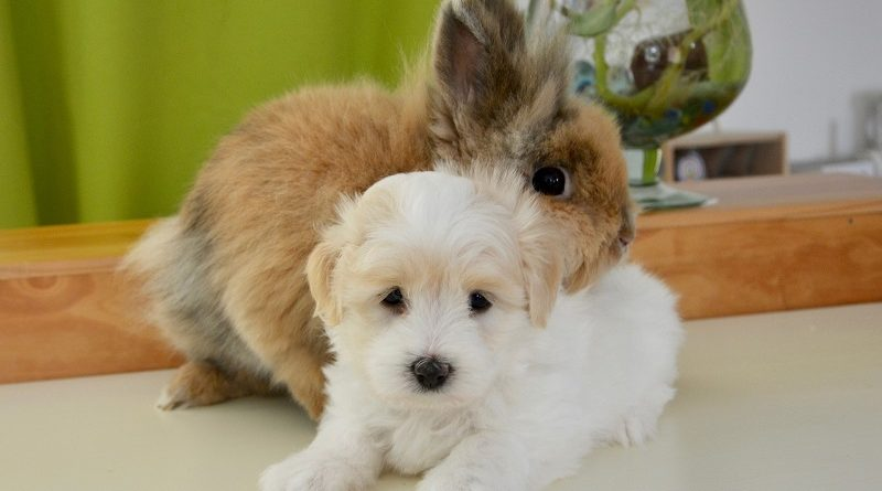 konijn en puppy