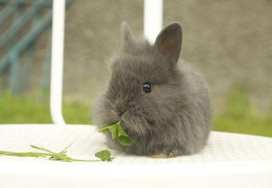 Darmproblemen en aandoeningen bij konijnen