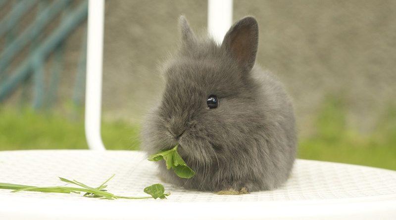 konijn eet blaadjes