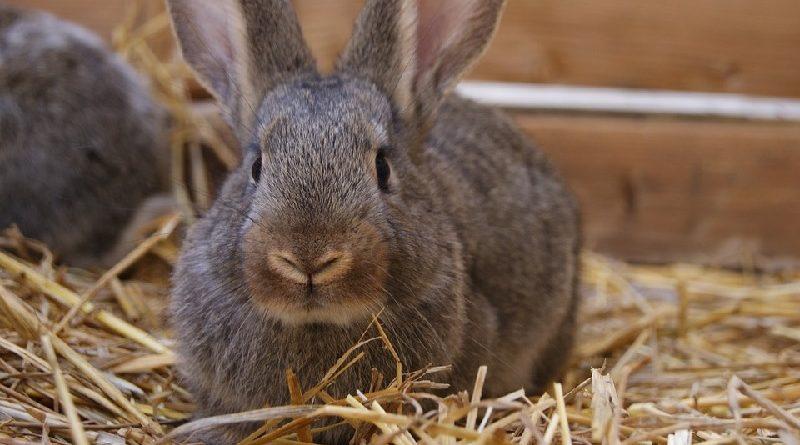 konijn met stro