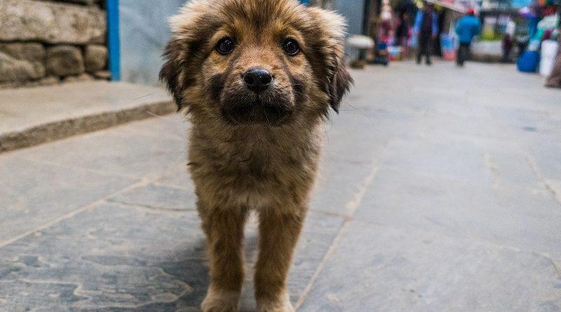 Straathond in het buitenland