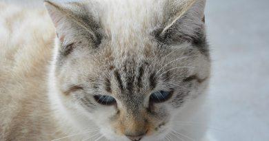 Suikerziekte bij katten