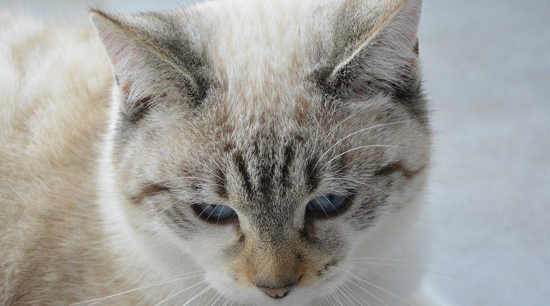 zieke kat