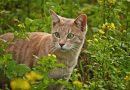 Lelies zijn giftig voor katten!